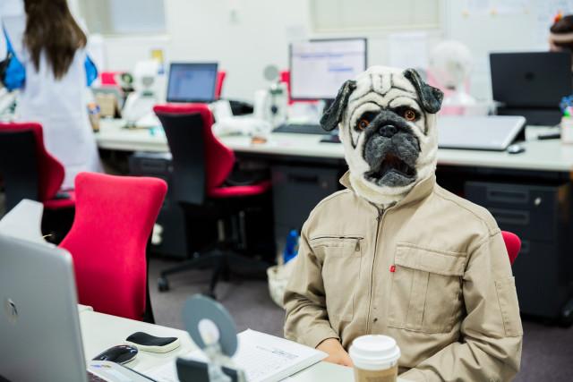 MAKOTO TOCHIKUBOの撮影した犬のハロウィン仮装写真