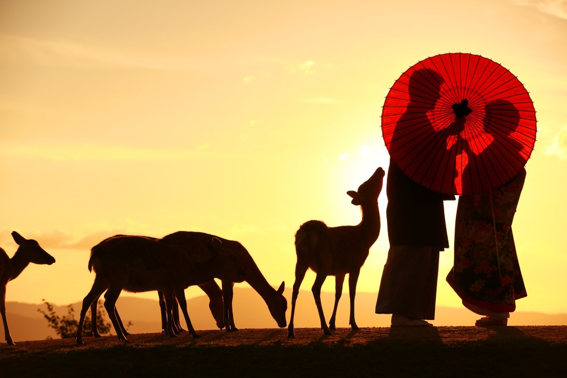umbrella and deer at sunset — Photo by by Hayashi Photo Works