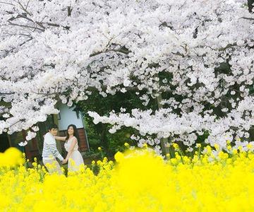 Sakura photo shoot