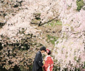 Seasonal photo shooting in Japan